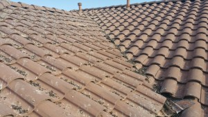 Pigeon poop obstructing the flow of rain that could cause roof damage.
