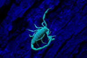 Scorpion hunt_0349