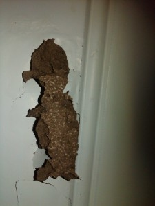 Wainscoting termite damage Fig. 5
