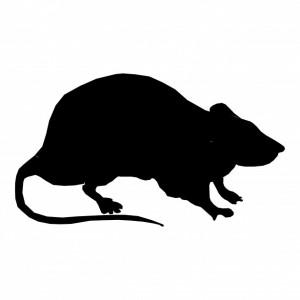 silhouette-rat